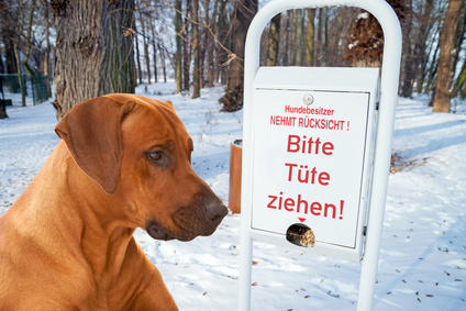 Дерьмо собачье